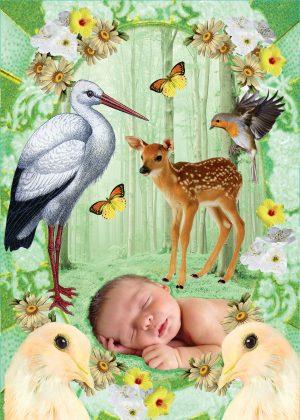 POSTCARD BIRTH